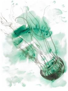 Jellyfish by Brenna Harvey