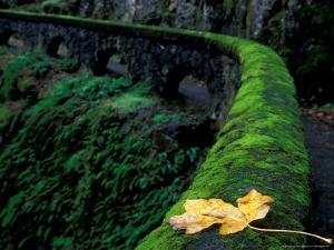 Fence Along Path to Shepherd's Dell Falls, Columbia River Gorge National Scenic Area, Oregon, USA by Brent Bergherm