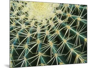 Spine Pattern Detail of Golden Barrel, Cactaceae of Central Mexico by Brent Bergherm