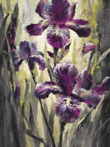 Ambient Iris 2 by Brent Heighton