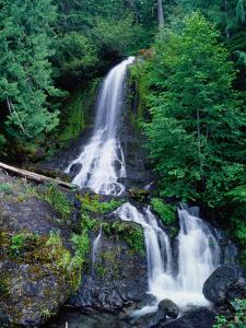 Cascading Waterfall Through Rainforest, Mt. Rainier National Park, USA by Brent Winebrenner