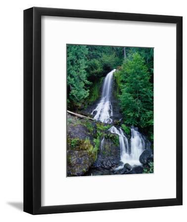 Cascading Waterfall Through Rainforest, Mt. Rainier National Park, USA