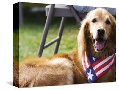 Dog Wearing Patriotic Scarf, Anchorage, Alaska