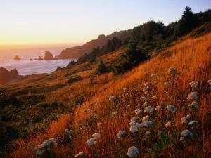 Morning Light Over Mushrooms in Cape Ferrelo, Boardman State Park, Brookings, USA by Brent Winebrenner