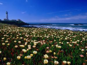 Pigeon Point Lighthouse of San Mateo County, with Wildflowers in Foreground, Sacramento, USA by Brent Winebrenner