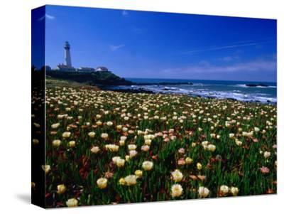 Pigeon Point Lighthouse of San Mateo County, with Wildflowers in Foreground, Sacramento, USA