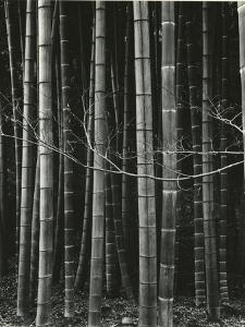 Bamboo Forest, Japan, 1970 by Brett Weston