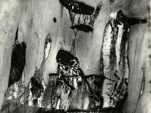 Bark, Europe, 1971 by Brett Weston