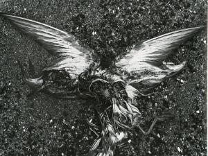Bird, Sand , c. 1970 by Brett Weston