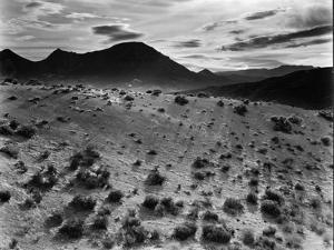 Brush and Mountains, Desert Landscape, c.1960 by Brett Weston