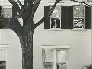 Building and Tree, c. 1945 by Brett Weston