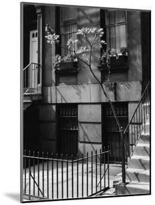 Building and Tree, New York, 1944 by Brett Weston
