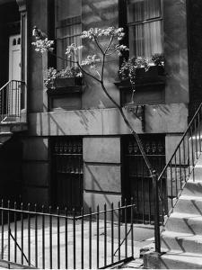 Building and Tree, New York, 1944 by Brett Weston