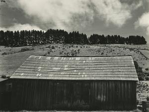 Building and Trees, Landscape, 1936 by Brett Weston