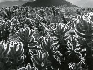 Cactus and Landscape, c. 1940 by Brett Weston