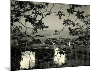 Cemetery and Tree, California, 1955 by Brett Weston