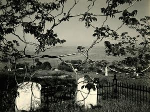 Cemetery and Tree, California, 1955 by Brett Weston