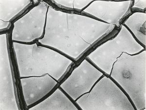 Cracked Mud, High Sierra, California, 1960 by Brett Weston