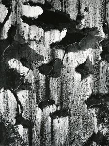 Cracked Paint, c. 1970 by Brett Weston