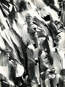 Cracked Plastic Paint, Garrapata, 1951 by Brett Weston