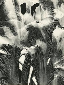 Cracked Plastic Paint, Garrapata, 1954 by Brett Weston