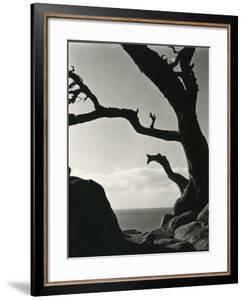 Cypress, Point Lobos, California, 1928 by Brett Weston