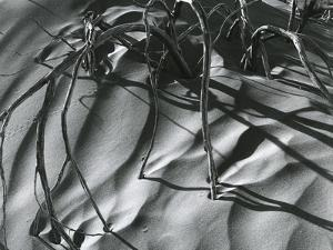 Dead Branches, Detail, White Sands, New Mexico, c. 1940 by Brett Weston