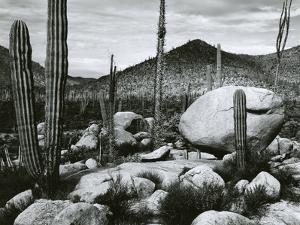 Desert Landscape, Mexico, 1967 by Brett Weston