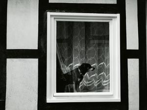 Dog In Window, Europe, 1968 by Brett Weston