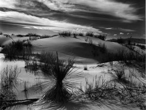 Dune and Yucca, White Sands, New Mexico, 1946 by Brett Weston