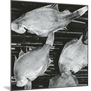Fish, Japan, 1970 by Brett Weston