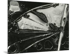 Glass, 1954 by Brett Weston