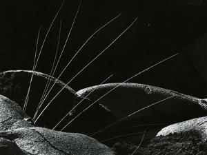 Grass and Lava, Hawaii, 1982 by Brett Weston