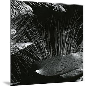 Grass and Lava, Hawaii, c. 1980 by Brett Weston