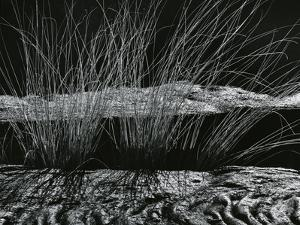Grass and Lava, Hawaii, c. 1980 by Brett Weston