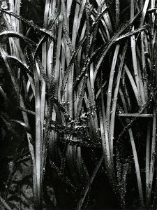 Grass and Water, c. 1970 by Brett Weston