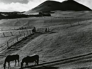 Horses and Landscape, c. 1975 by Brett Weston