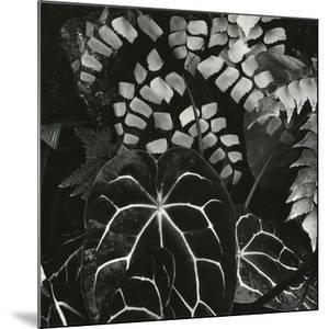 Hot House Plants, Botanical Garden, San Francisco, 1978 by Brett Weston
