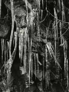 Ice and Branch, Oregon, 1971 by Brett Weston