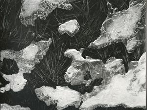 Ice and Grass, High Sierra, California, c. 1950 by Brett Weston