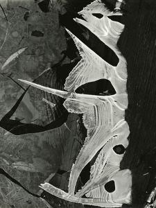 Ice Formation, 1975 by Brett Weston