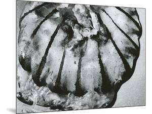 Jellyfish, Oregon, 1967 by Brett Weston