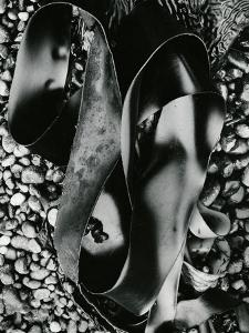 Kelp and Pebbles, Oregon, 1974 by Brett Weston