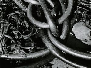 Kelp and Sand, 1977 by Brett Weston