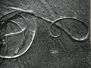 Kelp and Sand, c. 1965 by Brett Weston