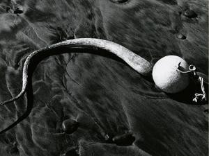 Kelp, Baja, California, c. 1967 by Brett Weston