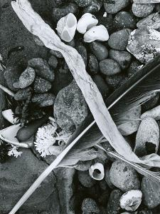 Kelp, Feather, Rock, Carmel Beach, California, 1956 by Brett Weston