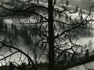 Landscape, Europe, 1968 by Brett Weston