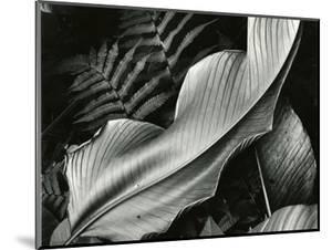 Leafs and Ferns, Hawaii, 1979 by Brett Weston