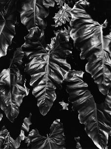 Leaves, Hawaii, c. 1985 by Brett Weston